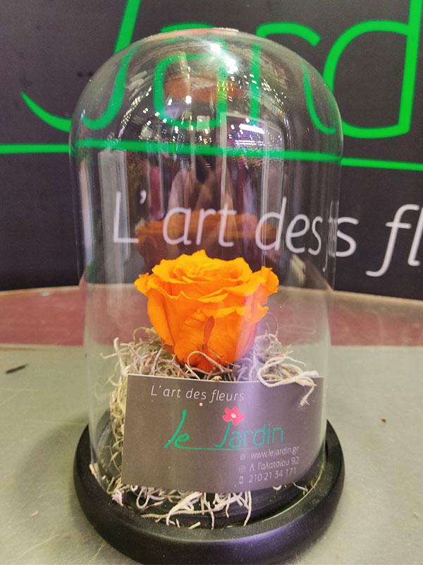 forever-rose-orange